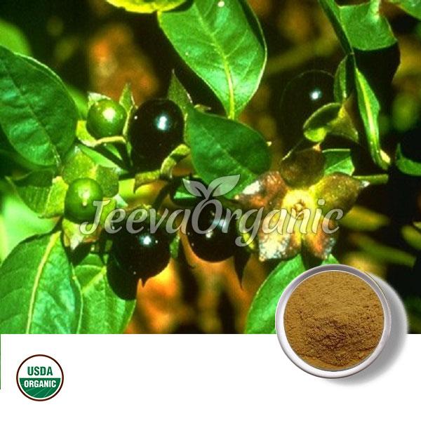 Belladonna Extract Powder