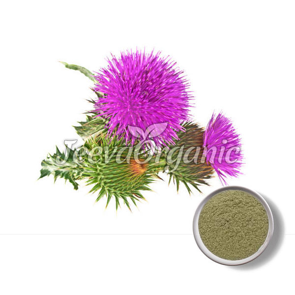Blessed-Thistle-Powder