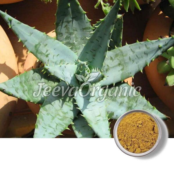 Cape-Aloe-Powder