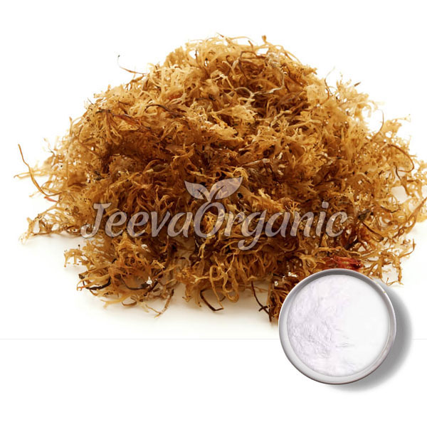 Carrageenan Powder