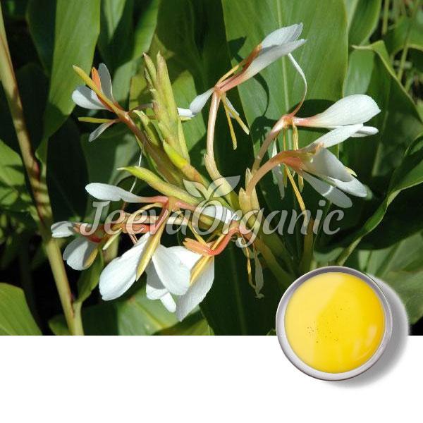 Hydichium Spictaum Oil